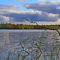 лесное озеро :: Елена Третьякова