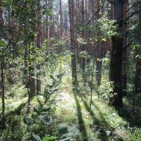 Последние денёчки лета . В лесу. :: Мила Бовкун