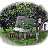 Рояль в кустах - кусты в рояле... :: muh5257