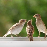 дела семейные :: linnud