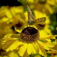 на цветке :: ник. петрович земцов