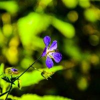 Цветок :: Inna Прибушаускайте