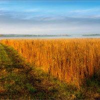 Осень... утро... :: Александр Никитинский