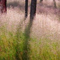 Тени на траве :: Денис Пересыпкин