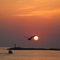 полет на закате :: valeriy khlopunov
