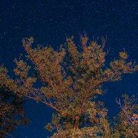 Звездное дерево :: Meriguan91 Николай
