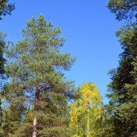 Лесные прогулки :: Ольга