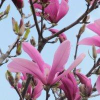 Цветочный хоровод-539. :: Руслан Грицунь