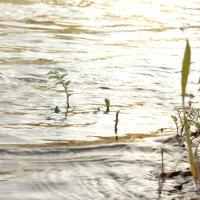 солнечное утро у реки :: Юлия окладникова