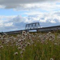 Вид на усть-вымский мост :: Николай Туркин