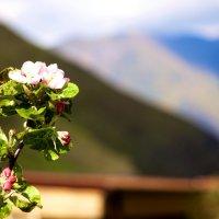 Цветок :: Азамат Битаров
