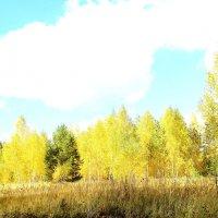 Золотая осень. :: Борис Митрохин