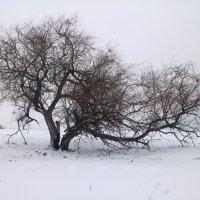 зима :: Юлия Гичкина