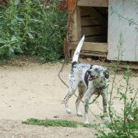 Собака цепная доброжелательная... :: Юлия Бабитко