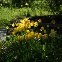 Когда-то была весна... :: Сергей Порфирьев