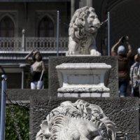 Спящий лев :: Денис Быстров