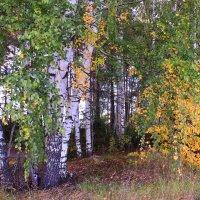 Вновь зажигает осень свой костер :: Татьяна Ломтева