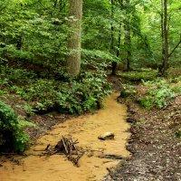 Лесной ручей :: Alexander Andronik