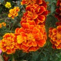 Еще остались летние цветы :: Елена Семигина