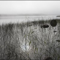 туман на озере :: liudmila drake