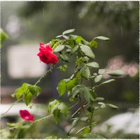 Дождливый день :: Анастасия Безуглая