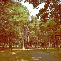 Крест в парке :: Людмила