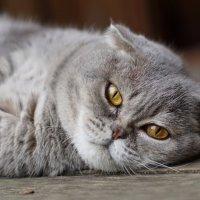 Устала я... :: Igor Khmelev