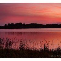 Закат на озере Кодосно, Псковская обл. :: Вера Ульянова