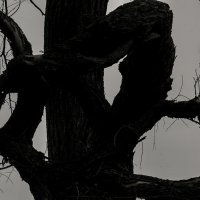 Иероглиф -- долголетие :: Людмила Синицына