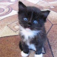 Котёнок :: Татьяна Овчинникова