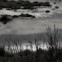 То ли озеро в небе плывет... :: Людмила Синицына