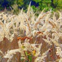 Еще звенит в сухой траве кузнечик. ... :: Валентина ツ ღ✿ღ