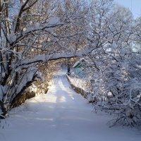 Тропка в снегу :: aksakal88