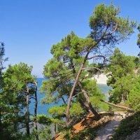 Из жизни деревьев :: Валерий Дворников