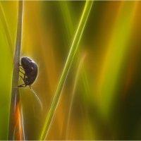 Сон маленькой козявки... :: Андрей Ветров