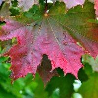 Вот и осень... :: Сергей F