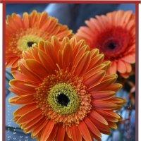 Быть может  оттого я так печален,что ярких красок нет вокруг меня?..Послал купить я красные цветы... :: Наталия Григорьева