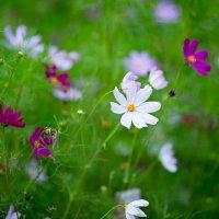 Цветы :: Анастасия Максимова