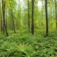 Ранняя осень в Юдинском лесу :: Наиля