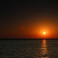 Чайка в отражении заходящего солнца :: valeriy khlopunov