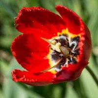 Лето, цветы, красота :: Александр Мантров