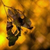 Осеннее :: Хась Сибирский
