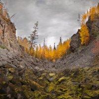 Siberia,Taiga :: Дмитрий Белозеров