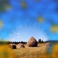 Вот и осень пришла... :: Борис Гуревич