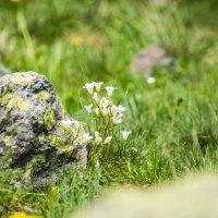цветы у озера Семицветное :: Евгений