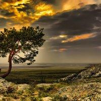Одинокое дерево :: Влад