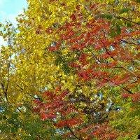 Осень :: Дмитрий Боргер