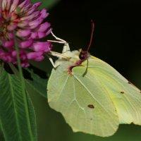 Бабочка :: Наталья