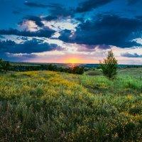 Летний закат :: Алина Гриб