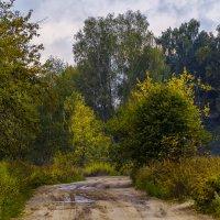 Дорога в осень :: Андрей Дворников